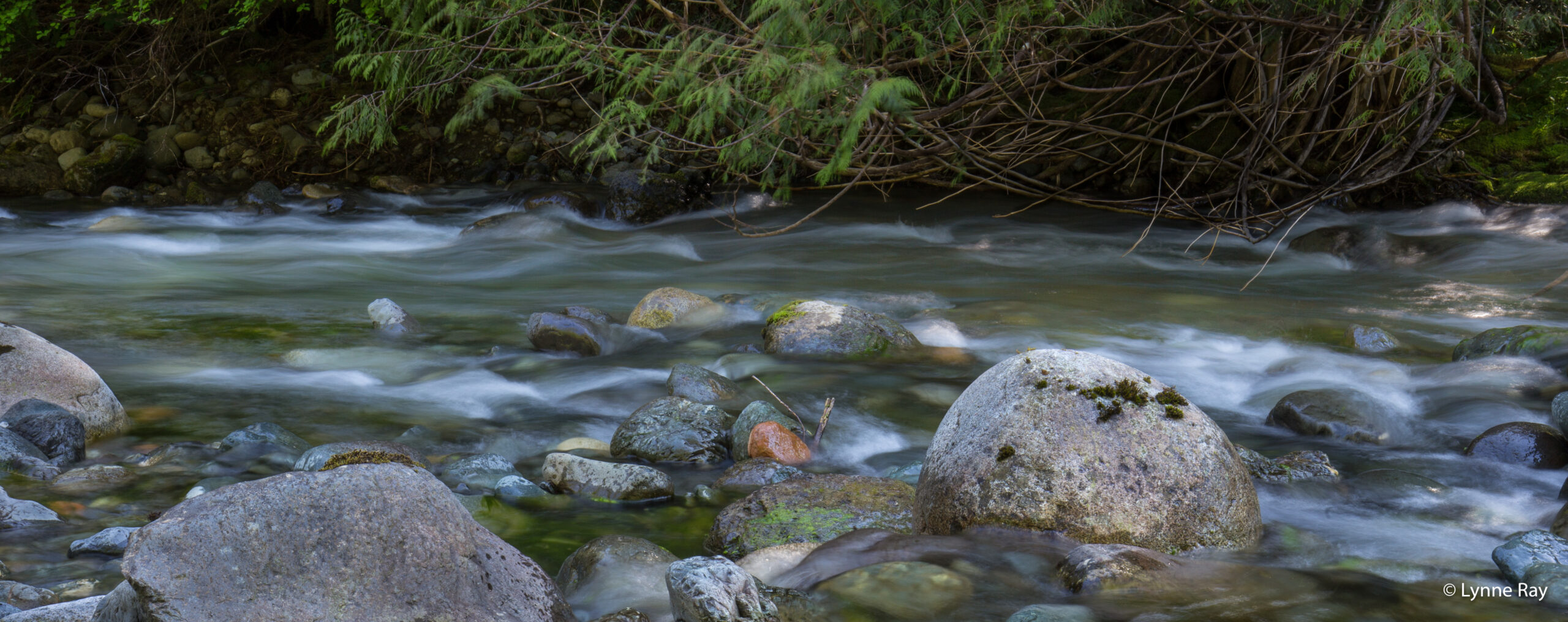 Beaufort Watershed Stewards