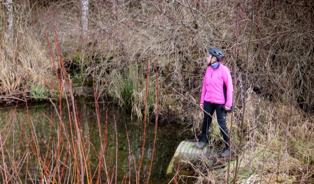 Introducing the New Creeks in our Expanded Sampling